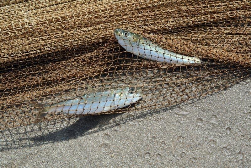 τα ψάρια δύο στοκ φωτογραφίες