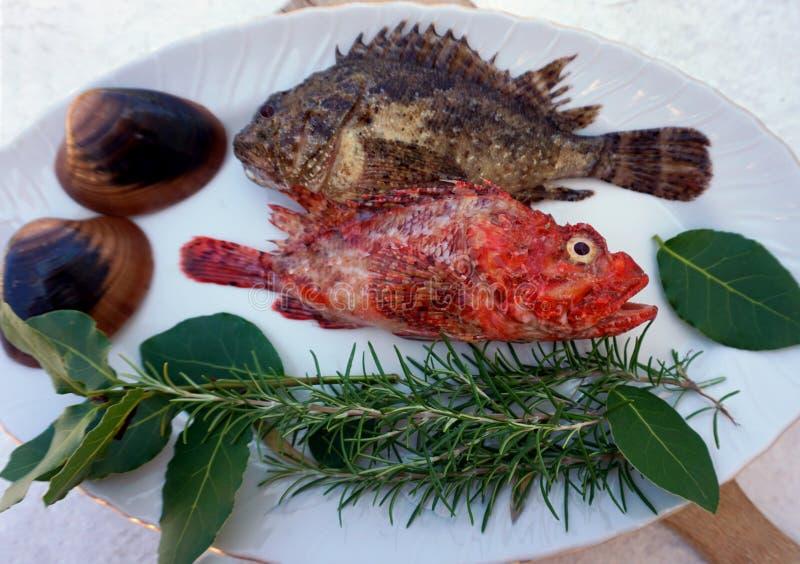 Τα ψάρια θάλασσας, τα κόκκινα ψάρια και τα ψάρια σκορπιών στο πιάτο, διακόσμησαν με τα φυσικά μεσογειακά χορτάρια και τα κοχύλια  στοκ εικόνα