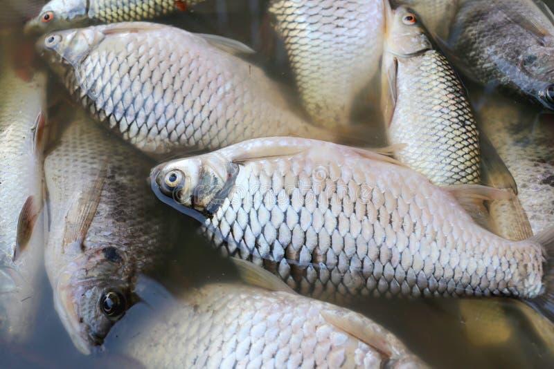 Τα ψάρια πέθαναν επειδή λύματα στοκ φωτογραφία με δικαίωμα ελεύθερης χρήσης