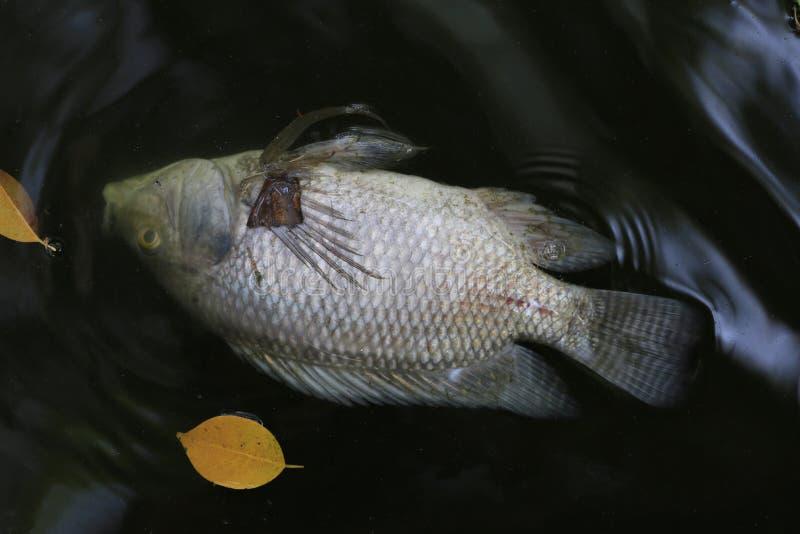 Τα ψάρια πέθαναν επειδή λύματα στοκ εικόνες