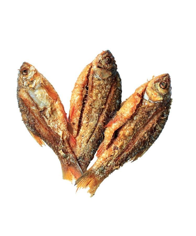 τα ψάρια στοκ φωτογραφία με δικαίωμα ελεύθερης χρήσης