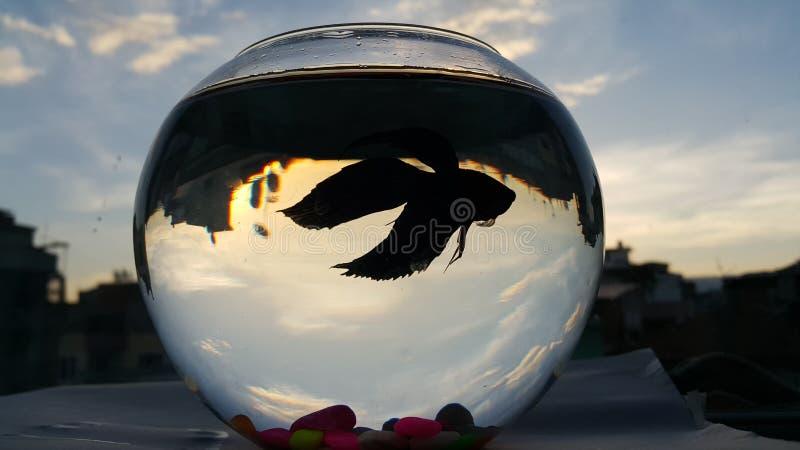 Τα ψάρια στοκ εικόνα