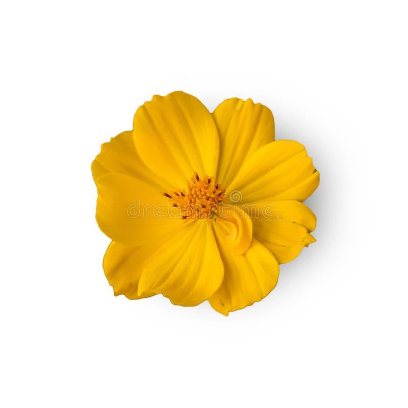 Τα όμορφα κίτρινα λουλούδια στοκ εικόνες