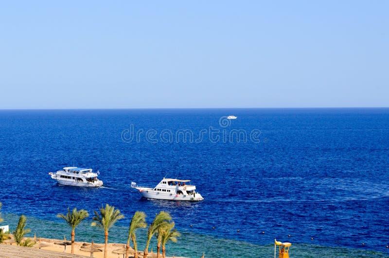 Τα όμορφα πολυτελή άσπρα γιοτ πλέουν κατά μήκος της μπλε αλατισμένης θάλασσας ενάντια στο σκηνικό των φοινίκων και μιας παραλίας  στοκ φωτογραφία