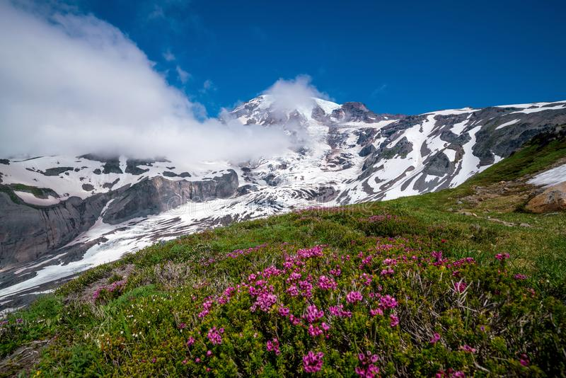 Τα όμορφα wildflowers και τοποθετούν πιό βροχερό, πολιτεία της Washington στοκ εικόνα