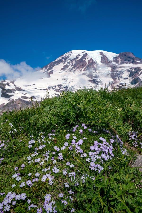Τα όμορφα wildflowers και τοποθετούν πιό βροχερό, πολιτεία της Washington στοκ φωτογραφίες