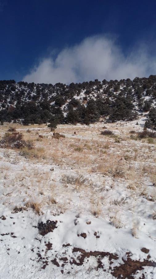 Τα δύσκολα βουνά στους Buena Vista στοκ εικόνα