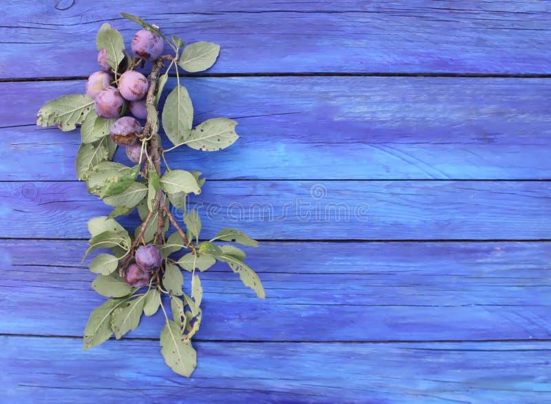 Τα ώριμα juicy φρούτα δαμάσκηνων στον ηλικίας μπλε ξύλινο πίνακα ένα καλοκαίρι καλλιεργούν Φρέσκα οργανικά δαμάσκηνα που αυξάνοντ στοκ φωτογραφίες