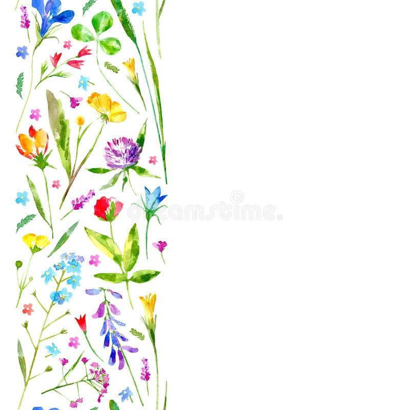 Τα Floral σύνορα άγρια περιοχών ανθίζουν και χορτάρια σε ένα άσπρο υπόβαθρο ελεύθερη απεικόνιση δικαιώματος