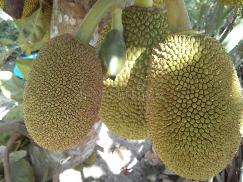Τα Fruity Jack-φρούτα είναι μεγάλα και η εύγευστη γλυκιά μυρωδιά διέδωσε παντού το σπίτι στοκ φωτογραφία