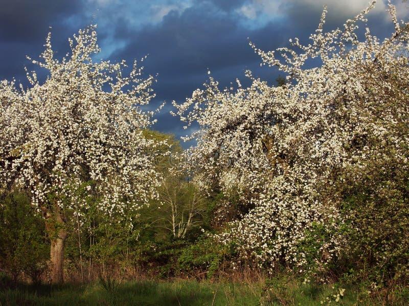 Download τελευταία άνοιξη ιεροτ&epsi Στοκ Εικόνες - εικόνα από τοπία, σύννεφα: 60606