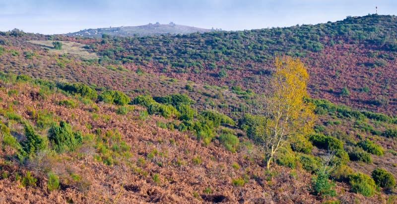 Τελευταία φθινοπωρινά χρώματα στις καταλανικές ορεινές περιοχές στοκ εικόνες