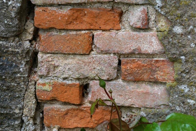 Τεμάχιο ενός τούβλινου τοίχου σπιτιών στοκ εικόνα με δικαίωμα ελεύθερης χρήσης