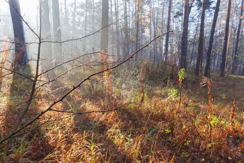 Τεμάχιο του δάσους φθινοπώρου με τον Ιστό αραχνών σε ένα πρώτο πλάνο στοκ εικόνες