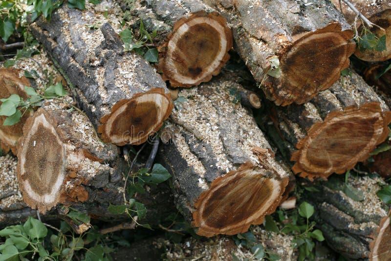 Τεμαχισμένα ξύλινα κούτσουρα στοκ εικόνες