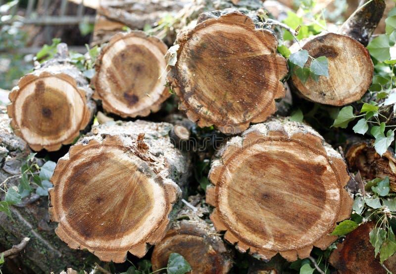 Τεμαχισμένα ξύλινα κούτσουρα στοκ εικόνα με δικαίωμα ελεύθερης χρήσης