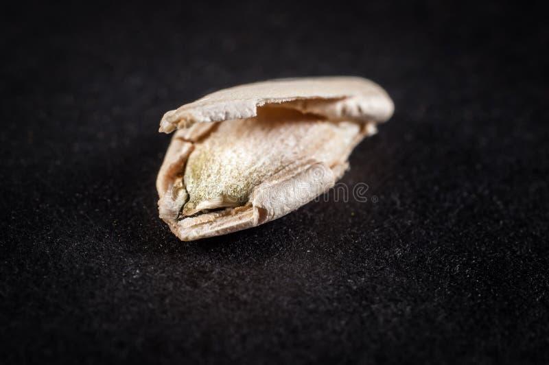 Τεμαχισμένος σπόρος κολοκύθας στο κοχύλι σε ένα σκοτεινό υπόβαθρο στοκ φωτογραφίες