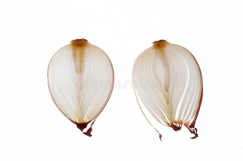 Τεμαχισμένο κρεμμύδι στοκ εικόνες με δικαίωμα ελεύθερης χρήσης