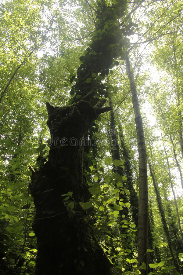 τεράστιο δέντρο στοκ φωτογραφία