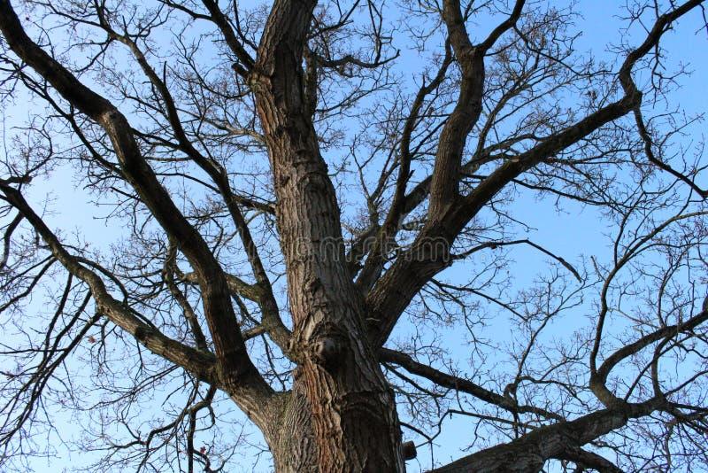 τεράστιο δέντρο στοκ εικόνα με δικαίωμα ελεύθερης χρήσης