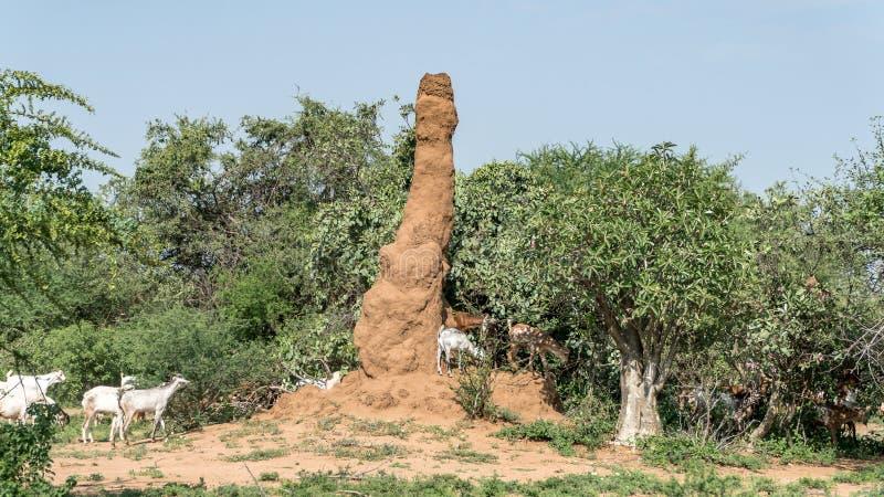 Τεράστιο ανάχωμα τερμιτών στην Αφρική, νότια Αιθιοπία, κοιλάδα Omo στοκ εικόνες με δικαίωμα ελεύθερης χρήσης