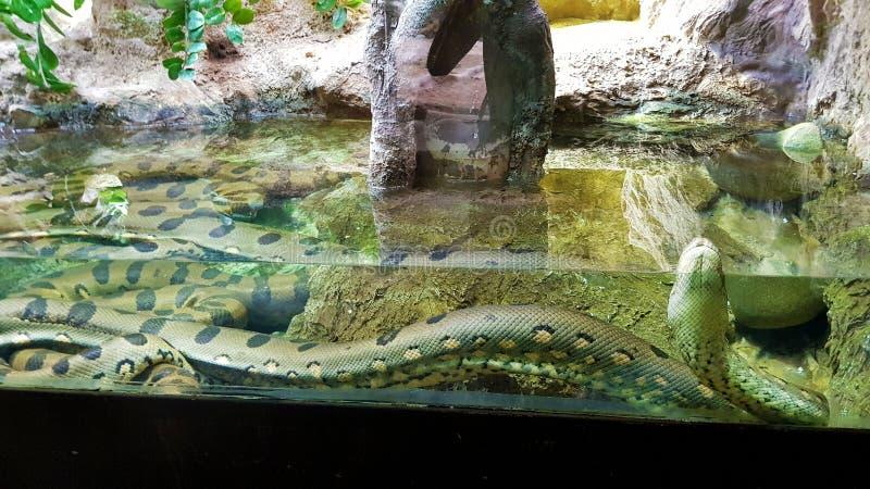 Τεράστιο φίδι στοκ εικόνες