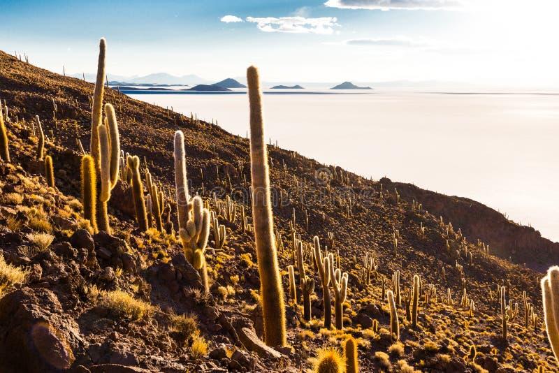 Τεράστιο Salar de Uyuni κάκτων φυσικό τοπίο βουνών νησιών στοκ εικόνα με δικαίωμα ελεύθερης χρήσης