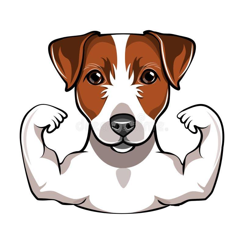 Τεριέ του Jack Russell με το muscule διάνυσμα διανυσματική απεικόνιση