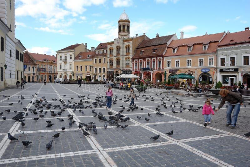 τετράγωνο των συμβουλίων πουλιών στοκ εικόνα με δικαίωμα ελεύθερης χρήσης