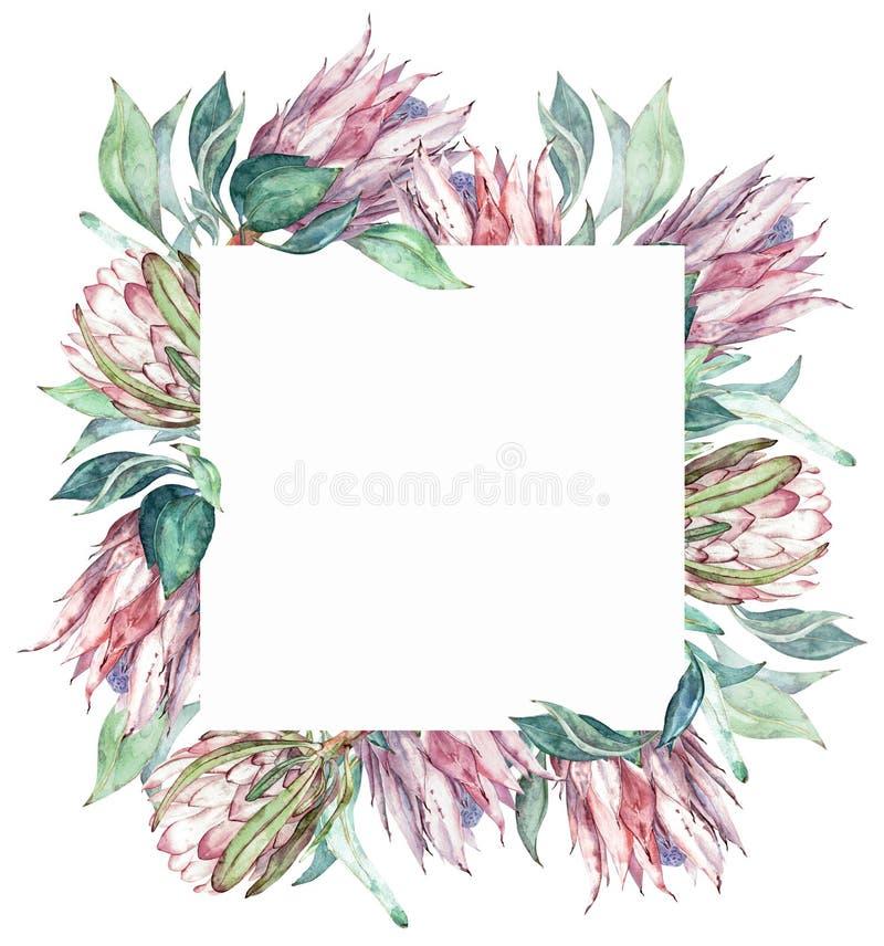 Τετραγωνικό ρόδινο πλαίσιο protea Εξωτική floral απεικόνιση Watercolor απεικόνιση αποθεμάτων