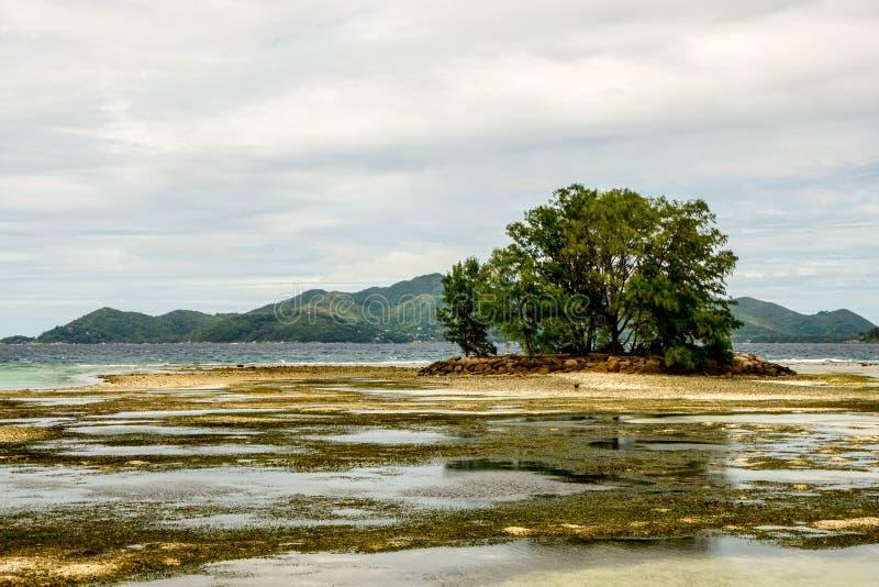 Τεχνητό νησί με τα threes σε μια παραλία κοραλλιογενών υφάλων, πηγή Anse στοκ εικόνες