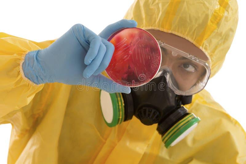 Τεχνικός ερευνητικών εργαστηρίων που εξετάζει petri το κιβώτιο πιάτων στοκ φωτογραφία με δικαίωμα ελεύθερης χρήσης