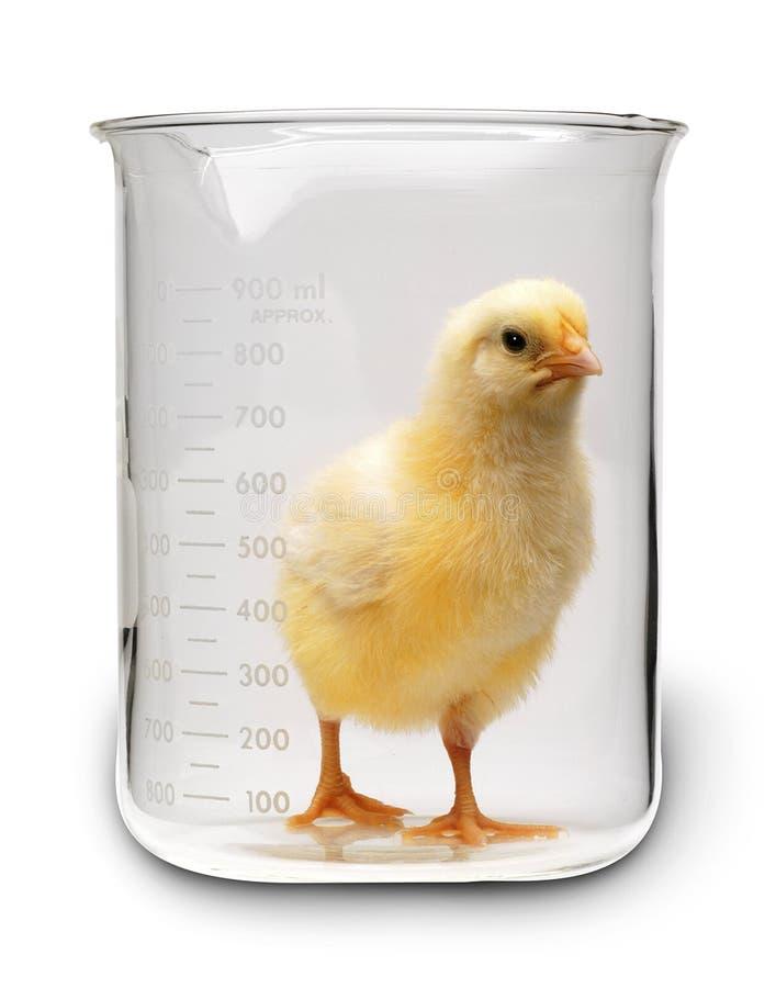 τεχνολογία ορμονών τροφί&mu στοκ εικόνα με δικαίωμα ελεύθερης χρήσης
