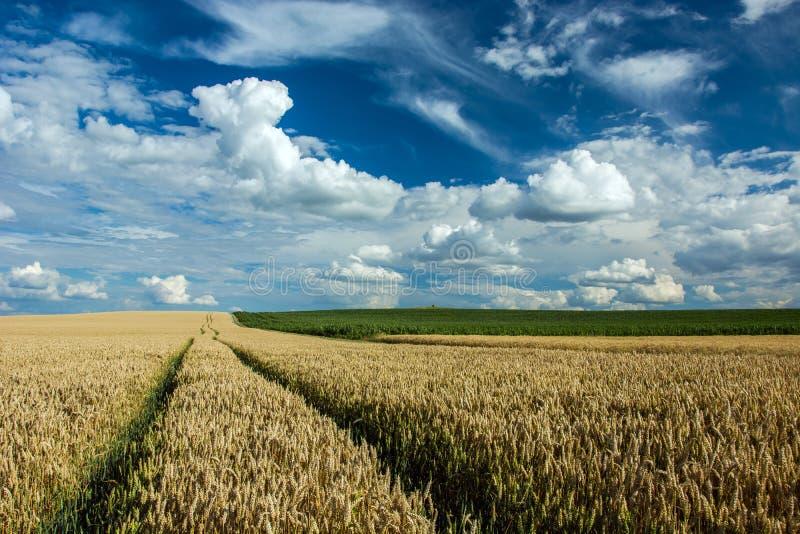 Τεχνολογική πορεία στον τομέα σίτου και σύννεφα στον ουρανό στοκ φωτογραφία με δικαίωμα ελεύθερης χρήσης