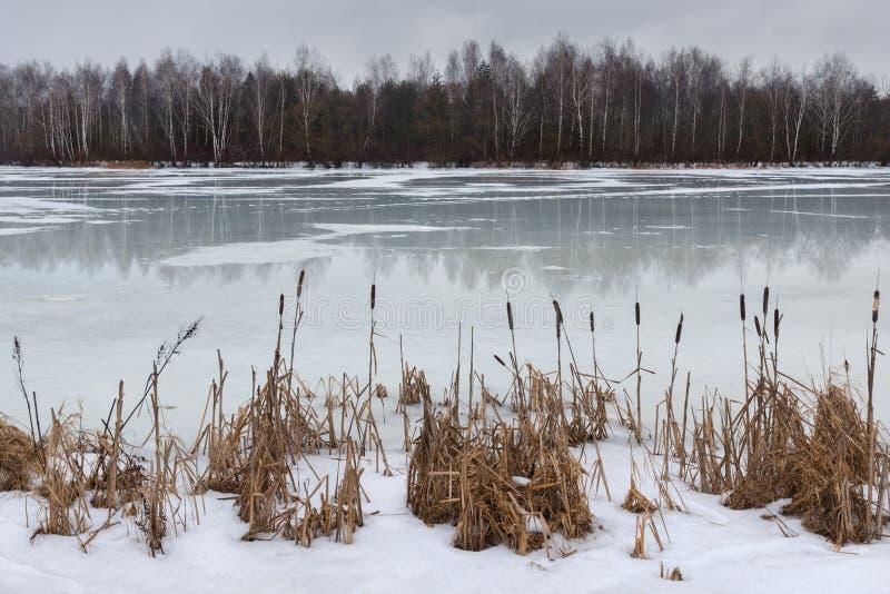 Τελευταίος πάγος Το τέλος του χειμώνα, η αρχή της άνοιξης Τοπίο με το λειώνοντας πάγο και κάλαμοι στην ακτή την πρώιμη άνοιξη ή τ στοκ εικόνες