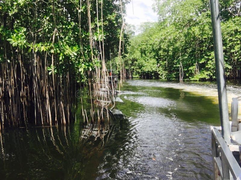 Τζαμαϊκανά μαγγρόβια στοκ φωτογραφία με δικαίωμα ελεύθερης χρήσης