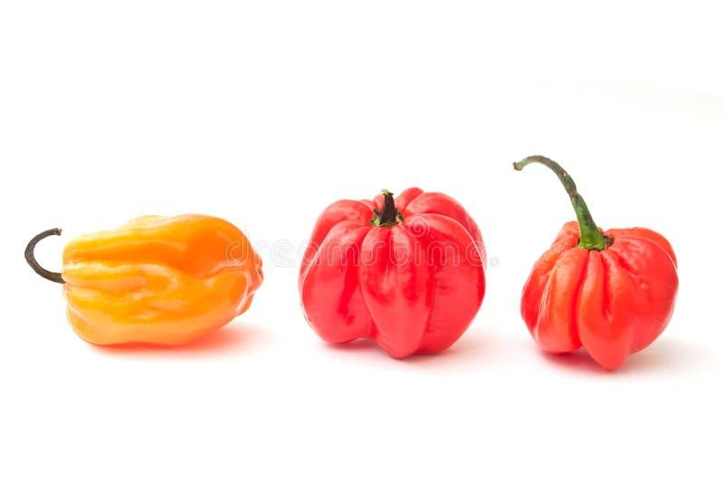 Τζαμαϊκανά πιπέρια στοκ φωτογραφία με δικαίωμα ελεύθερης χρήσης