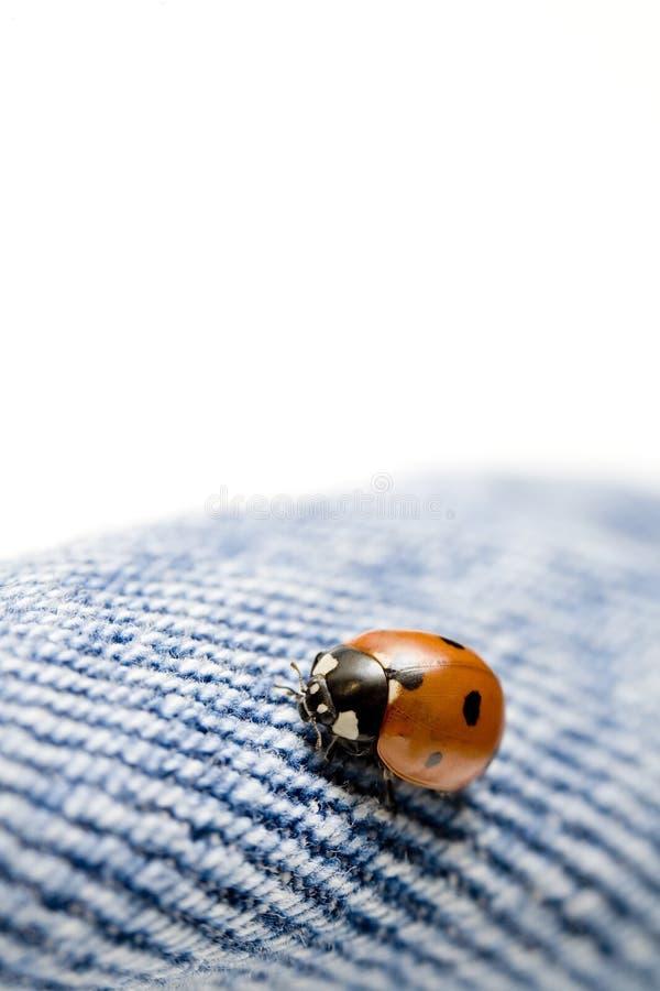 τζιν παντελόνι ladybug στοκ φωτογραφία με δικαίωμα ελεύθερης χρήσης
