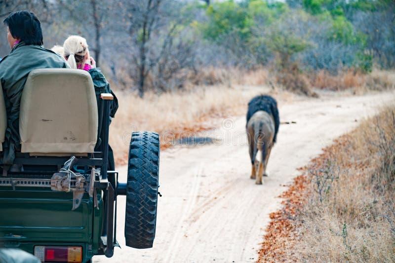 Τζιπ λιονταριών στοκ εικόνα με δικαίωμα ελεύθερης χρήσης