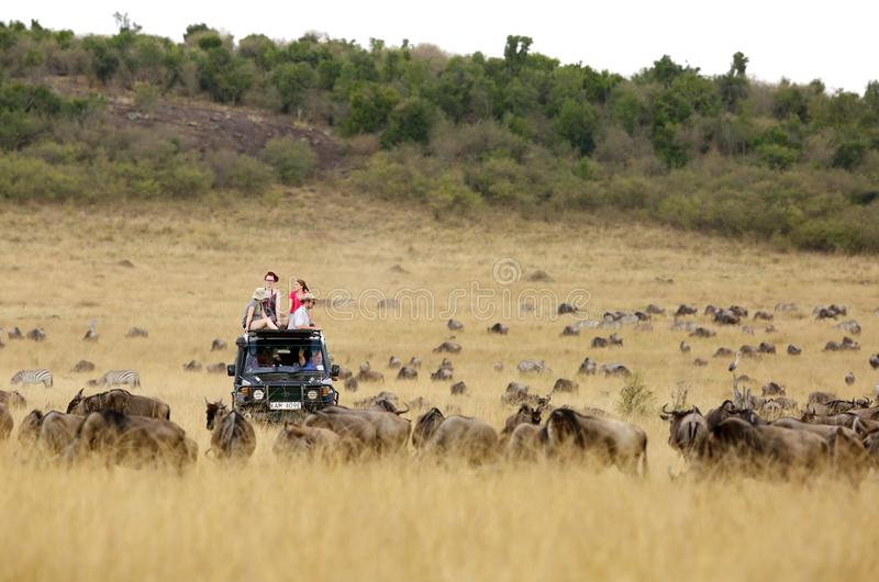 Τζιπ σαφάρι για την κίνηση παιχνιδιών σε Masai Mara στοκ εικόνες με δικαίωμα ελεύθερης χρήσης