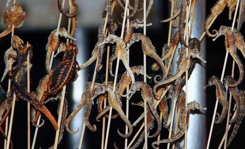 Τηγανισμένος seahorses - κινεζική λιχουδιά στην οδό Wangfujiang, Κίνα στοκ εικόνες