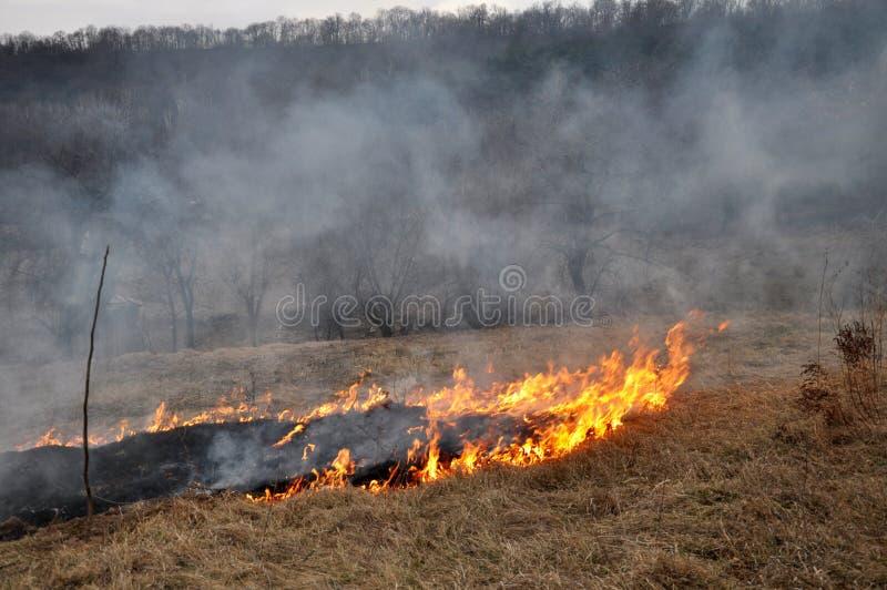 Την άνοιξη, μια ξηρά χλόη καίγεται στοκ εικόνες με δικαίωμα ελεύθερης χρήσης