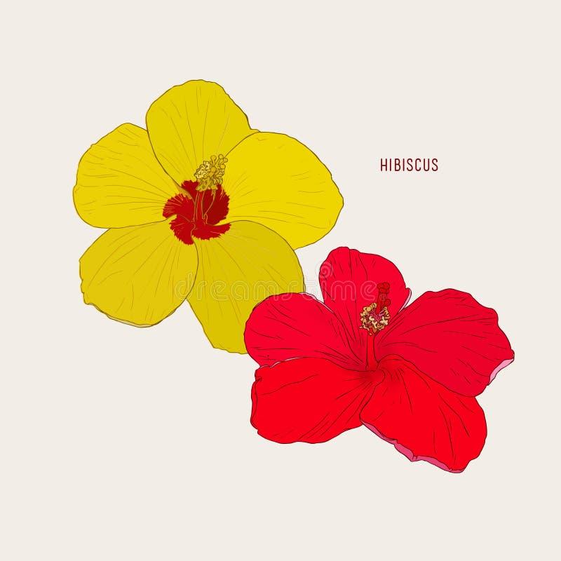 Της Χαβάης hibiscus λουλούδια, διάνυσμα σκίτσων διανυσματική απεικόνιση