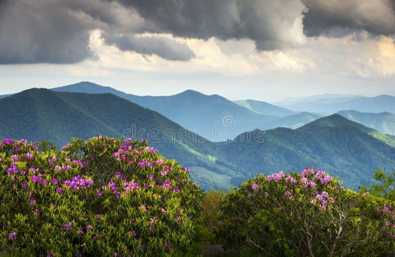 της όξινης απορροής μπλε άνοιξη κορυφογραμμών βουνών λουλουδιών στοκ εικόνα με δικαίωμα ελεύθερης χρήσης