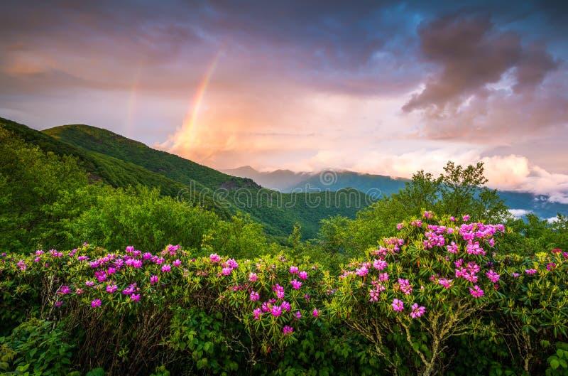 Της όξινης απορροής μπλε κορυφογραμμή τοπίων λουλουδιών ανοίξεων βουνών φυσική στοκ φωτογραφία με δικαίωμα ελεύθερης χρήσης