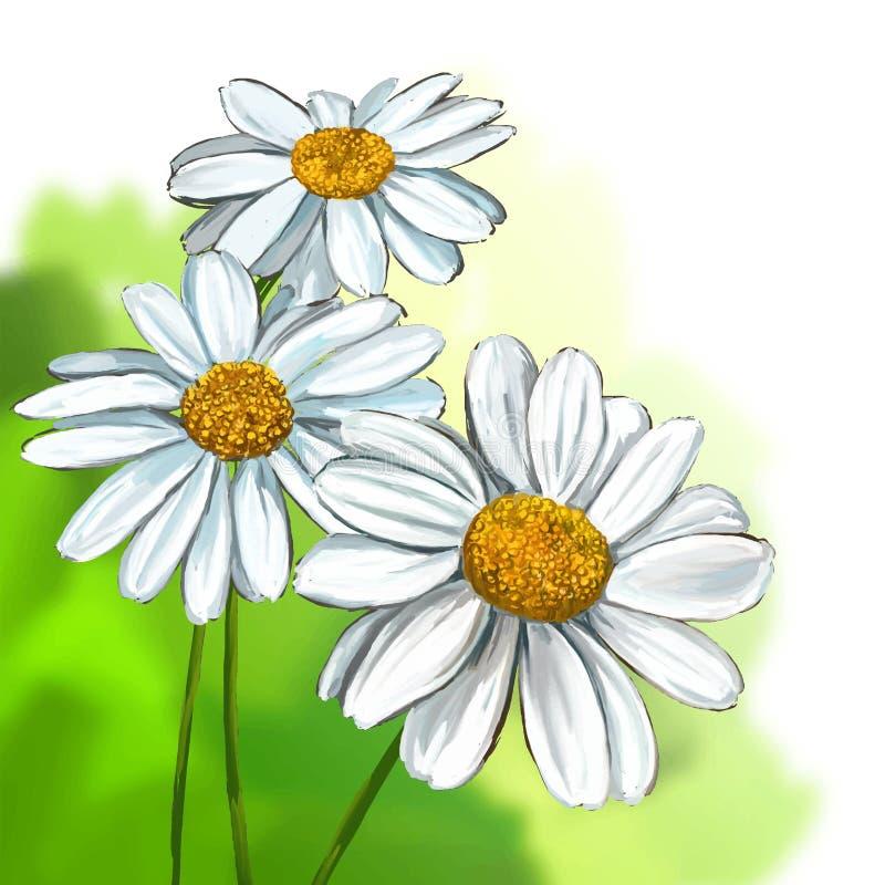 Της Daisy χέρι απεικόνισης που σύρεται διανυσματικό που χρωματίζεται ελεύθερη απεικόνιση δικαιώματος
