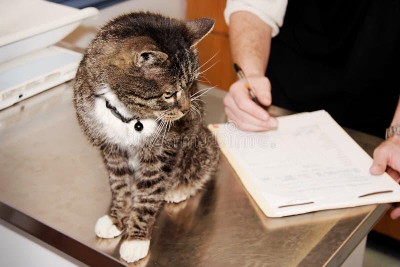 Τιγρέ γάτα ο κτηνίατρος στοκ φωτογραφία με δικαίωμα ελεύθερης χρήσης