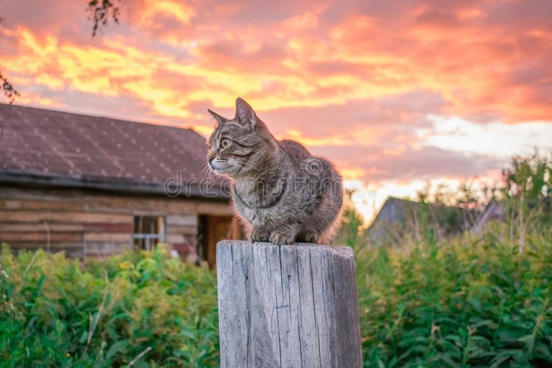 Τιγρέ γάτα στο ηλιοβασίλεμα στο χωριό στοκ εικόνα με δικαίωμα ελεύθερης χρήσης