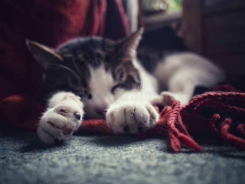 Τιγρέ γάτα ύπνου στο σπίτι στοκ φωτογραφίες