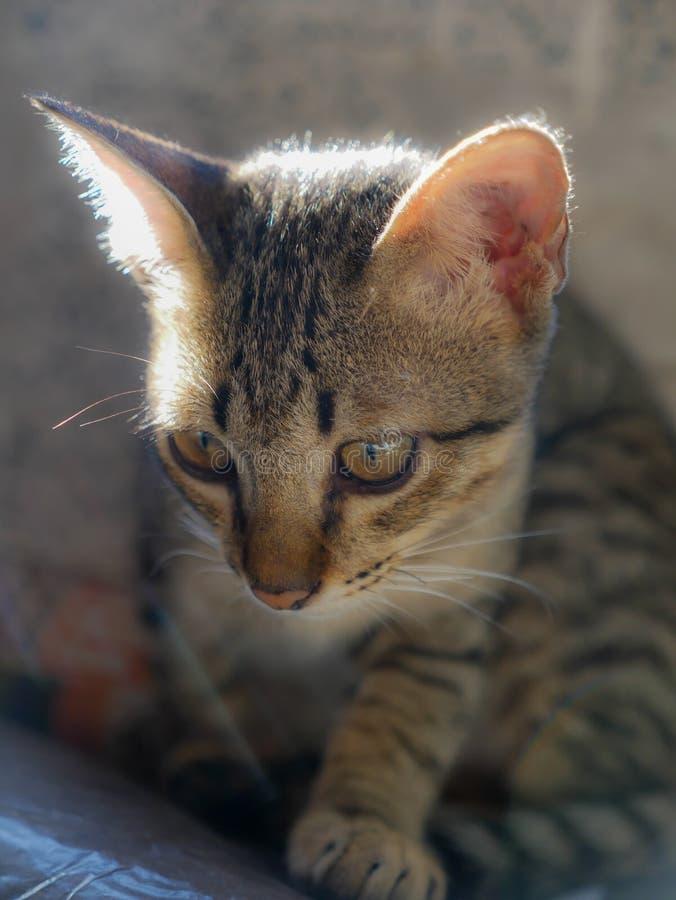 Τιγρέ γατάκι μπροστά από αναδρομικά φωτισμένο στοκ φωτογραφία με δικαίωμα ελεύθερης χρήσης
